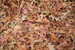Autumn leaf. The fallen autumn leaf on floor Stock Photos
