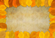 Autumn leaf frame. On a textured background vector illustration