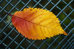 Autumn leaf on fence Stock Images