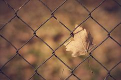 Autumn leaf on fence Royalty Free Stock Images