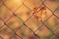 Autumn leaf on fence Royalty Free Stock Photography