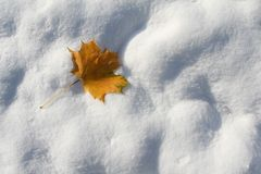 Autumn leaf on the first snow stock images