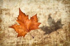 Autumn Dreams Stock Image