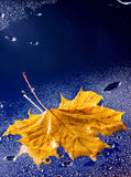 Autumn leaf floating on water with rain Stock Image