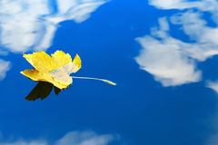 Autumn leaf floating on water reflection of the blue sky and white clouds Stock Photo