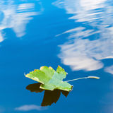 Autumn leaf floating on water reflection of the blue sky and white clouds Royalty Free Stock Photos