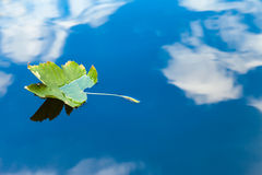 Autumn leaf floating on water reflection of the blue sky and white clouds Stock Photography