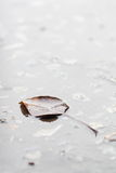 Autumn leaf floating on the water surface - Stock Image Royalty Free Stock Photo