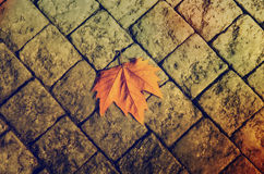 Autumn leaf on the floor Royalty Free Stock Photography