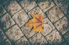 Autumn leaf on the floor Stock Image