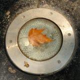 Autumn leaf on floor light Stock Photo