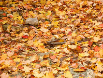Autumn Leaf Forest Background Royaltyfri Bild