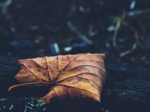 Autumn leaf in the forest Stock Photo