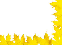 Autumn leaf frame. Frame made out of autumn maple leaves. White background Royalty Free Stock Photography