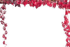 Autumn leaf frame Stock Image