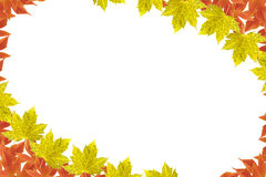 Autumn Leaf Frame. Frame (Autumn leaves) on isolated background royalty free stock image