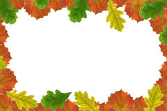 Autumn Leaf Frame Stock Image