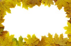 Autumn leaf frame Royalty Free Stock Photos