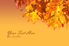 Autumn Leaf Frame. Corner frame of autumn leaves in gold and orange Stock Images