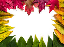 Autumn leaf frame Royalty Free Stock Images