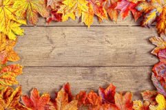 Autumn Leaf Frame Border Royalty Free Stock Image