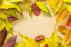 Autumn leaf frame Royalty Free Stock Image