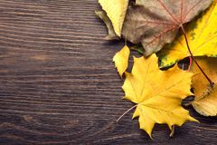 Autumn leaf frame for words and inscriptions, copy space. Top view royalty free stock images
