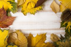 Autumn leaf frame for words and inscriptions, copy space. Top view stock photography