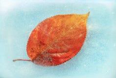 Autumn Leaf on Frozen Blue Water Stock Photo