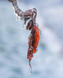 Autumn Leaf Frozen in einem Eisregen Lizenzfreie Stockfotos