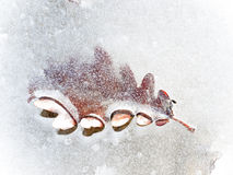 Autumn leaf frozen in the ice Stock Photography