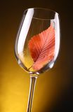 Autumn leaf in a glass Stock Images
