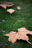 Autumn leaf in the grass Royalty Free Stock Images