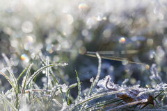Autumn leaf and grass in a sunny frost October cool morning Stock Image