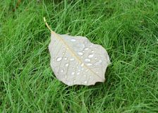 Autumn leaf on green grass Stock Images