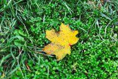 Autumn leaf on green grass Stock Photo