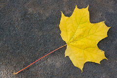 Autumn leaf, green, yellow and orange color, isolated on dark ce Stock Photos
