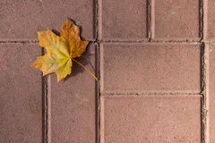 Autumn leaf, green, yellow and orange color, isolated on dark ce Stock Photo