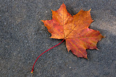 Autumn leaf, green, yellow and orange color, isolated on dark ce Royalty Free Stock Images