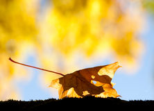 Autumn leaf on the ground Royalty Free Stock Photo