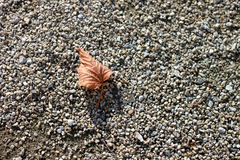 Autumn leaf on the ground. In Autumn, a leaf on the ground Royalty Free Stock Photo