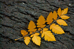 Autumn leaf on the ground Royalty Free Stock Image