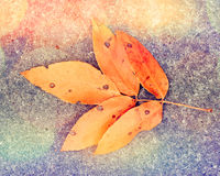 Autumn leaf on the ground Royalty Free Stock Photography
