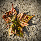 Autumn leaf on the ground. Stock Images