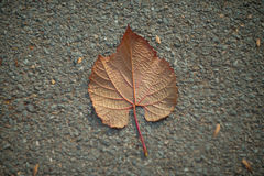 Autumn leaf on the ground Stock Photos