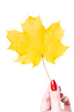 Autumn leaf and hand Royalty Free Stock Photos
