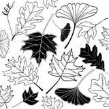 Autumn leaf hand drawn doodle illustration Stock Images