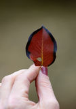 Autumn leaf in a hand Stock Images