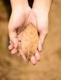 Autumn leaf. In hand top view Royalty Free Stock Image