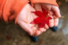Autumn leaf in hands Royalty Free Stock Photography